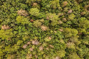 Údržba zeleně/lesy
